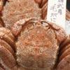 函館活いか浜料理 かみ磯 南第5ふ頭 - 料理写真:【浜茹で毛蟹姿盛&本ズワイ足】盛合せが追加可能デス♪