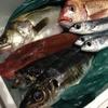 風鈴屋 - 料理写真:三崎港直送の鮮魚