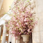 【名古屋】お花見をしながらレストランへGO~✿