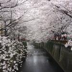 【東京・中目黒】サクラの季節が、超~オススメ♪2015