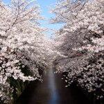 【お花見】目黒川の桜を見ながら食事ができるレストラン 5選