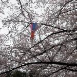 飛鳥山公園でのお花見の後に寄りたい王子駅界隈の酒場