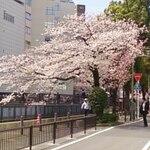お花見に最適、愛知県の桜の名所にあるお店