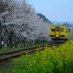 【千葉】菜の花電車途中下車♪花見とグルメの旅