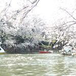 吉祥寺・井の頭公園でお花見するのにお薦めのお店