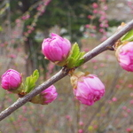 札幌近郊のお花見とセットで訪れたいお店5選