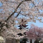 『宮島でお花見』 宮島は紅葉まんじゅうだけじゃありません 桜も綺麗に咲いています