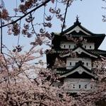 弘前公園のお花見の参考に~♪