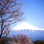 お花見カフェ&ランチ 京都 大阪 東京 岡山