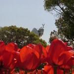 【吹田】 万博記念公園の四季を追ってみました 中央口周辺・自然文化園編☆♪