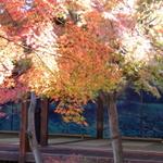 【秋の京都②】祇園歌舞練場周辺の、とっておきのお店達♪
