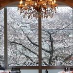目黒川(中目黒)桜の絶景レストラン決定版!!