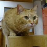 【京都市内】ニャンコがいるお店(猫カフェを中心に)