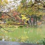 臥竜公園の茶店たち