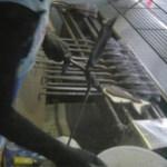 【鳥取食文化遺産】天然物のたい焼き(おまけ:天然物バナナ)