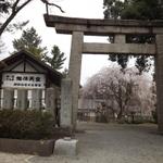 桜花爛漫の福井市足羽山公園内お薦め茶屋8軒