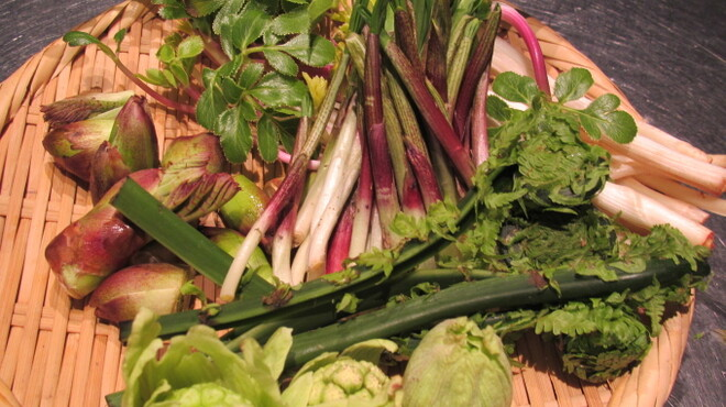 開陽亭 - 料理写真:春の味覚♪山菜盛合せ!たらの芽、ハマボウフ、こごみなど♪