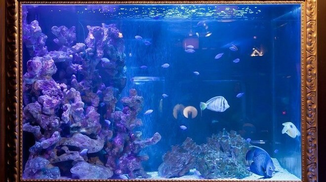 BLUE FISH AQUARIUM - メイン写真: