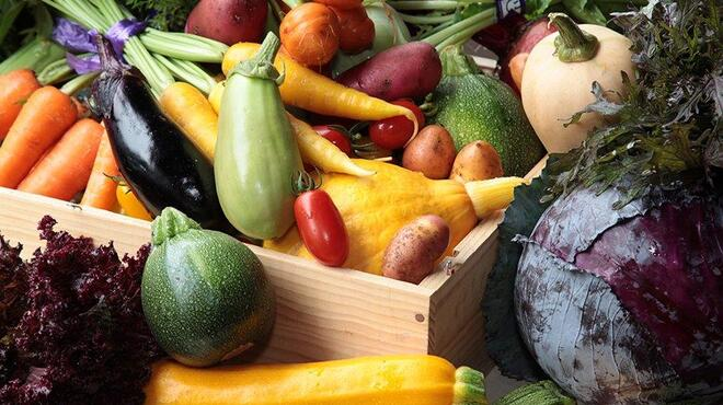 COVO - 料理写真:こだわりの朝採れ鎌倉有機野菜を直接買い付け!