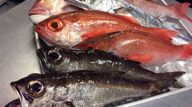 じんりきシーフードバール - 料理写真:201611、地物のお魚・一例。 真鯛、黒ムツ、スミヤキはお刺身で提供します! 白ムツはアクアパッツァにして提供します! 赤ムツはご希望の調理方法にて提供します! この機会に是非小田原のお魚をご賞味してください。