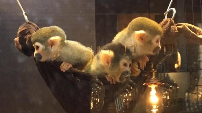 モンキーのいるレストラン&BAR - メイン写真: