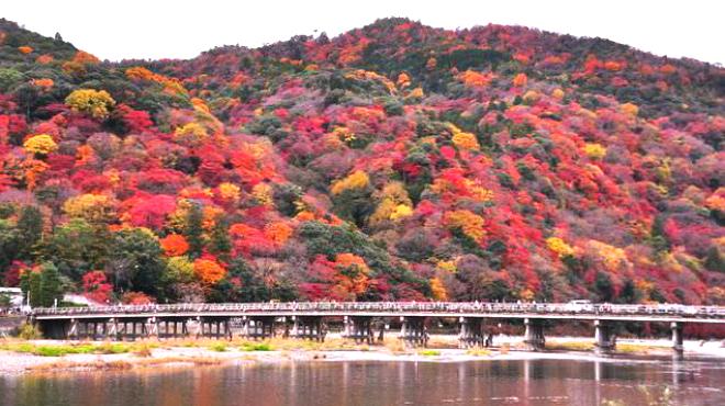 嵐山おぶう - メイン写真: