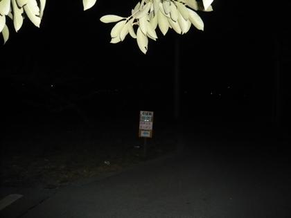 桃園ロボットラーメン