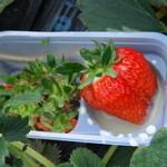 和田観光苺組合 - 練乳とイチゴ