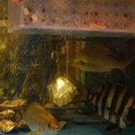 博多 一梅 - いけす出番を待つ、お魚たち