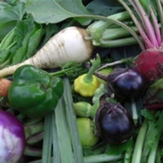普通の有機野菜とムーンビオ野菜の違い