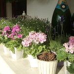 カサブランカ・フランセーズ - かわいらしい小花達が日差しを浴びています★