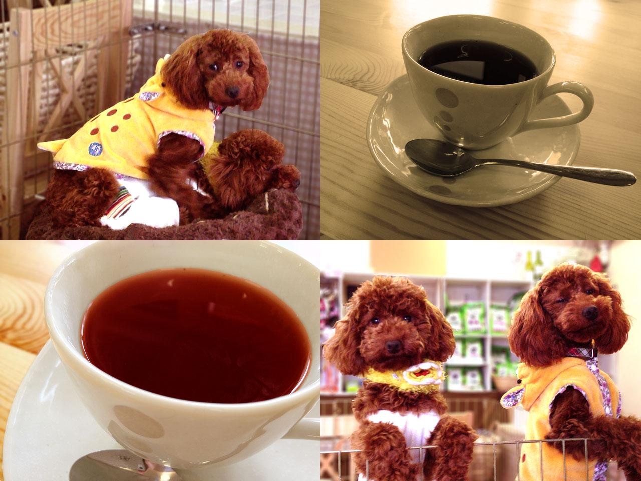 犬カフェ ココモ