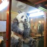ラーメンロッジ - パンダの剥製