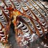 道とん堀 - 料理写真:お好み焼き