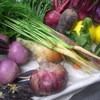トラットリア カンティーニ - 料理写真:岡山、田中さんから届いた有機野菜をシェフの手で料理します!