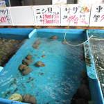 ぴんぴんや ゆたか丸 - 鮮魚コーナー