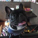 エスリル - 社員犬のジミニー