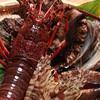 すし幸 花亭 - 料理写真:新鮮な海鮮素材を使用した料理をご堪能下さい