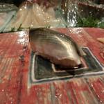 第三春美鮨 - 新子 一枚付 投網漁 28g 熊本県天草  ~2012年最後の新子かな