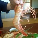 吉川鮮魚店 - ボタン海老を持たせた 吉川