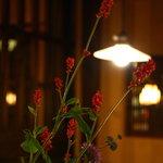 温古舎 - お店のいたるところに生けられる山野草。昭和初期に使われていたアンティークの照明。