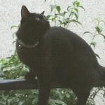 ビストロ ル シャノワール - 放浪猫