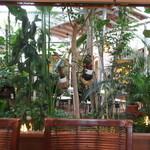 ベルベール - 中庭が、あります。テーブル席も、2つあるようです。