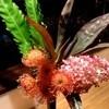 トワエモア - 料理写真:週替わりでお花を飾っています