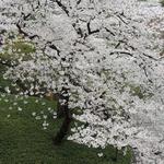 スラッシュカフェ - 八芳園の日本庭園で・・
