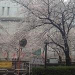 パーレンテッシ - 近くの目黒川は桜が満開