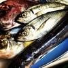 炭屋 饗 - 料理写真:毎日仕入れる地魚たち!