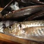 河岸 番外地 - 季節により様々な鮮度にこだわった魚を!