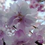 春風堂 -