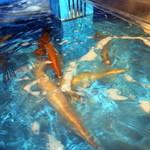 寅八商店 - イカが泳いでいます